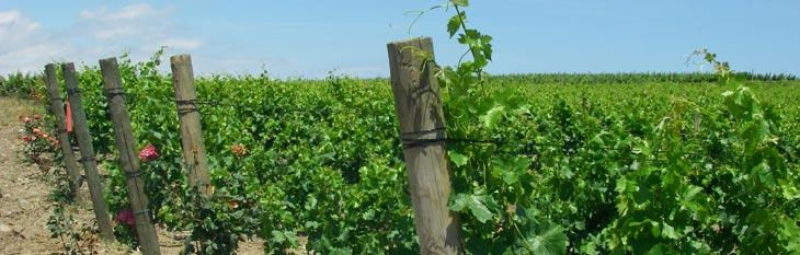 piquets viticoles Poteau en bois