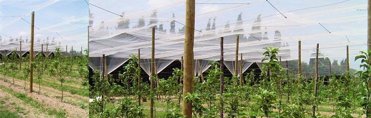 piquets arboricoles 2 Piquet en bois