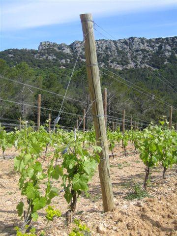 piquet viti PIQUETS VITICULTURE